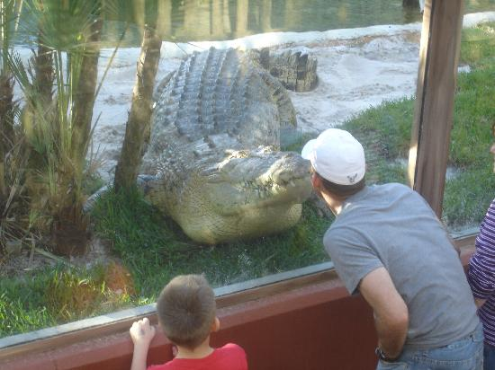 St. Augustine Alligator Farm 1