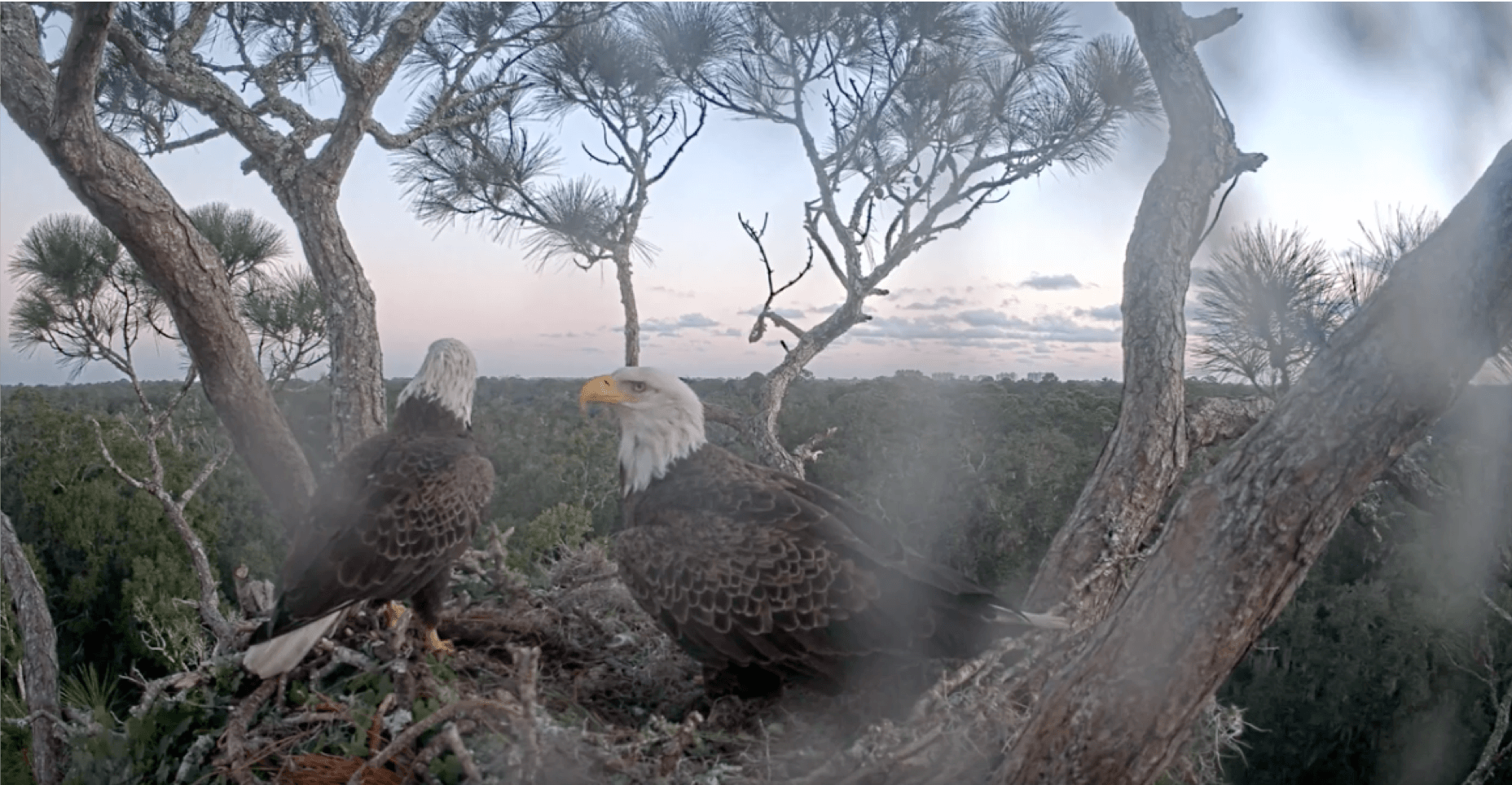 North East florida Eagle Cam