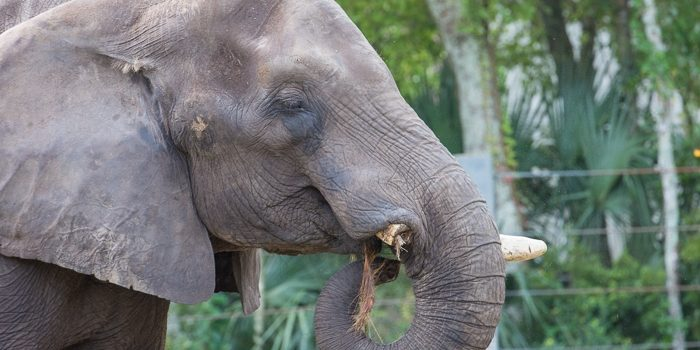 Jacksonville-Zoo-1120