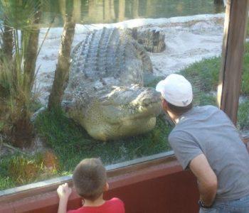 St. Augustine Alligator Farm 1